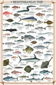 phoca_thumb_l_med-fish