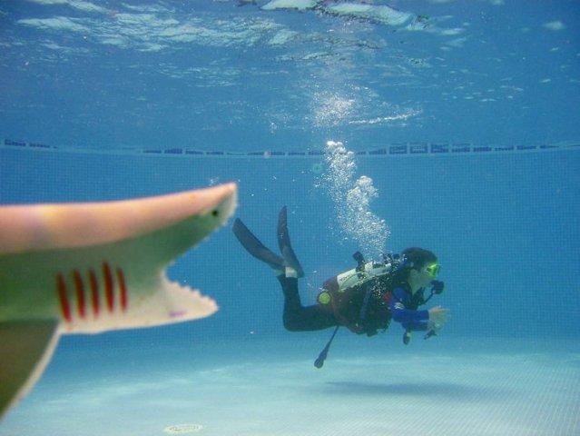 phoca_thumb_l_shark_in_pool_2-58