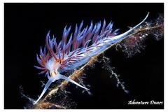 phoca_thumb_l_pinkflabena